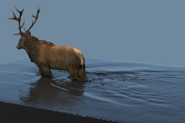 #15 Small-Scale Simulation of Stag Walking Through Water